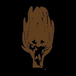 carduus-carciofo-amaro-brindisino-acquistaonline